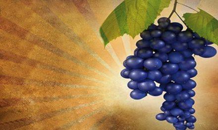 Anggur Rohani