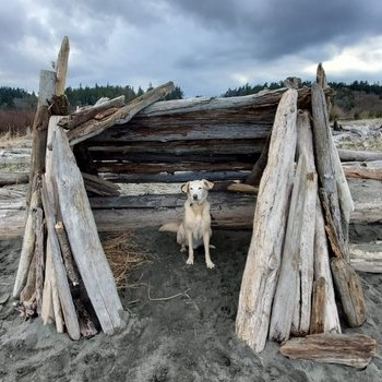 Tucker in a driftwood structure at Island View beach