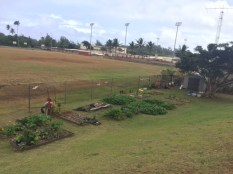 Kahuku Elementary Garden