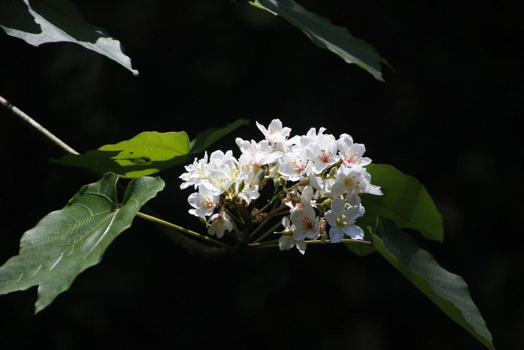 Photo: Tung flowers