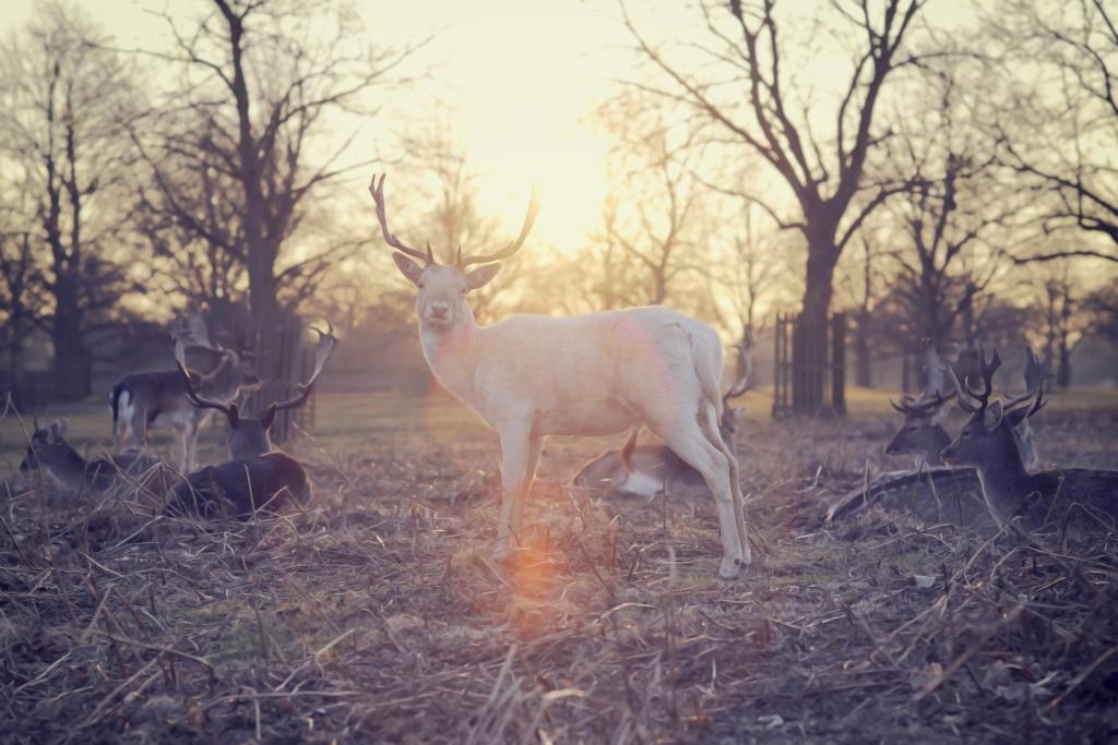 Photo: White stag