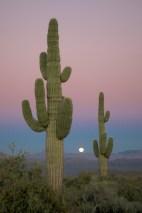 Phoenix 055
