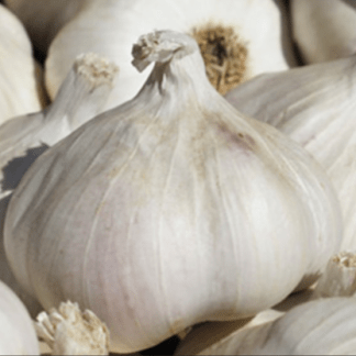 The Garlic Farm for all things garlicky!