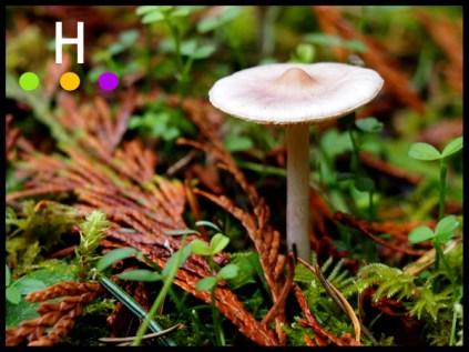 backyard mushrooms