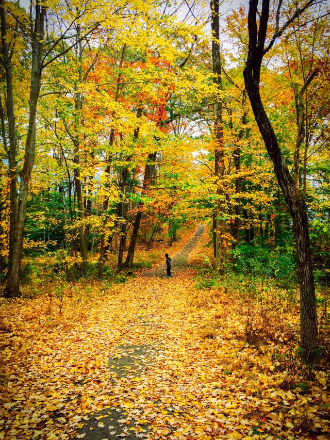 Leaves, Autumn, Fall, Forest