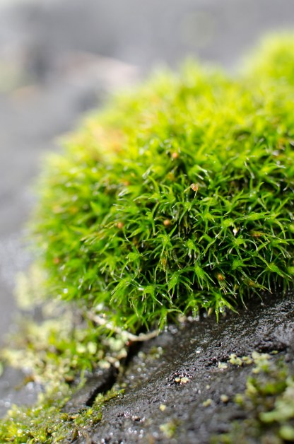 Moss and Lichen in the Sourland Mountain Preserve, Hopewell, New Jersey %name