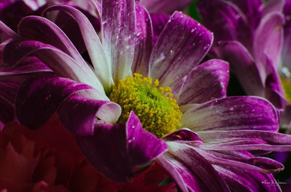 flower, macro, purple