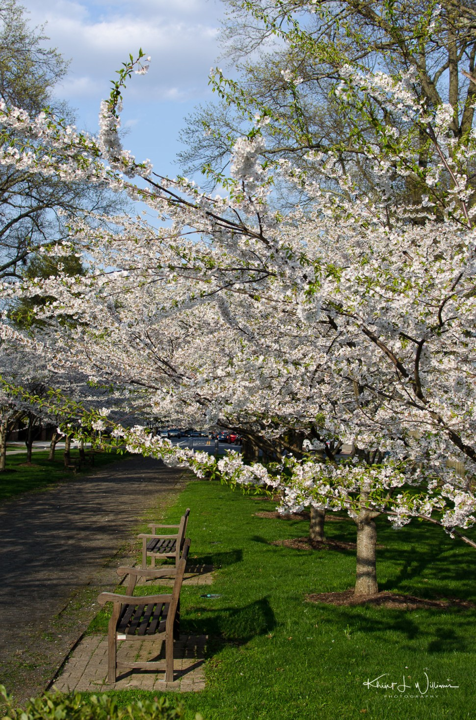 princeton, spring
