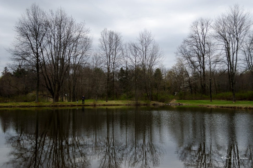water, pond, trees, clouds