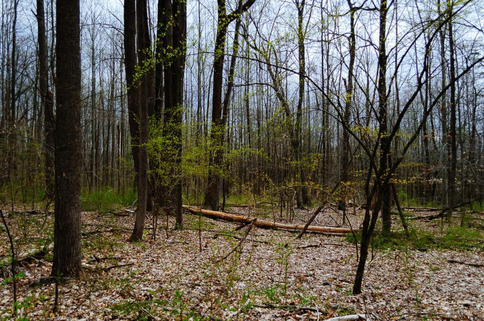 woods, trees, underbrush