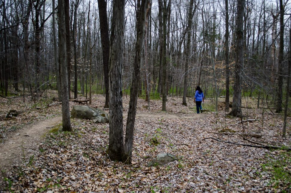 trail, water, sourland mountain, trees, woods, woman