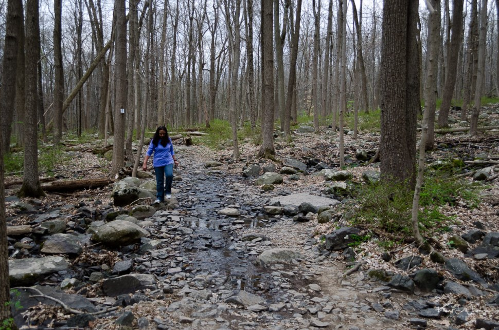 rocks, water, sourland mountain, trees, woods, woman