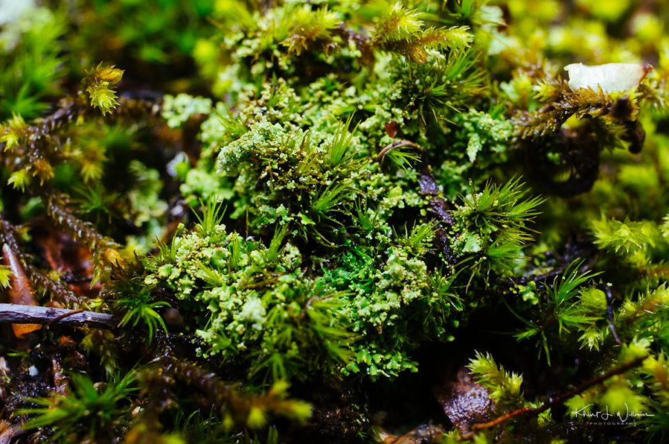 lichen, moss, textures