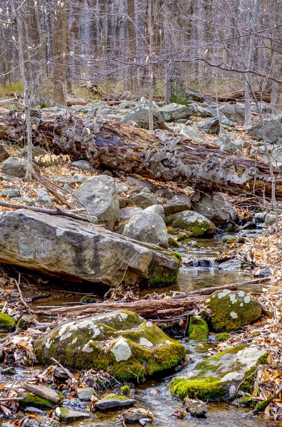 Rocks, Stream, Shrub