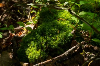 Boom moss