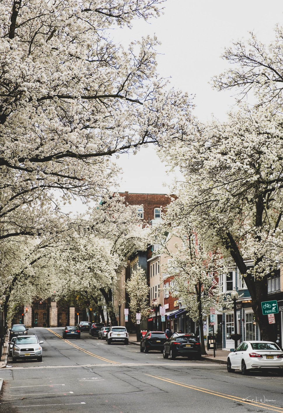 Witherspoon Street, Princeton, New Jersey