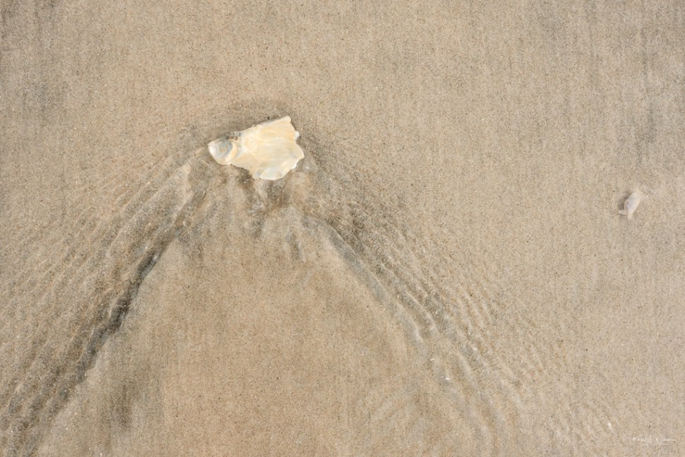 Sea shell Beach Scene