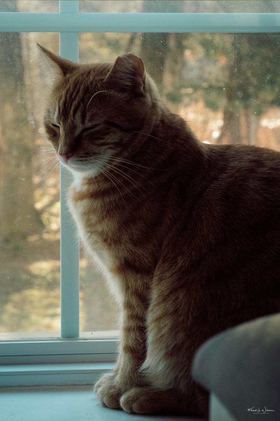 Alphie, Cat on windowsill