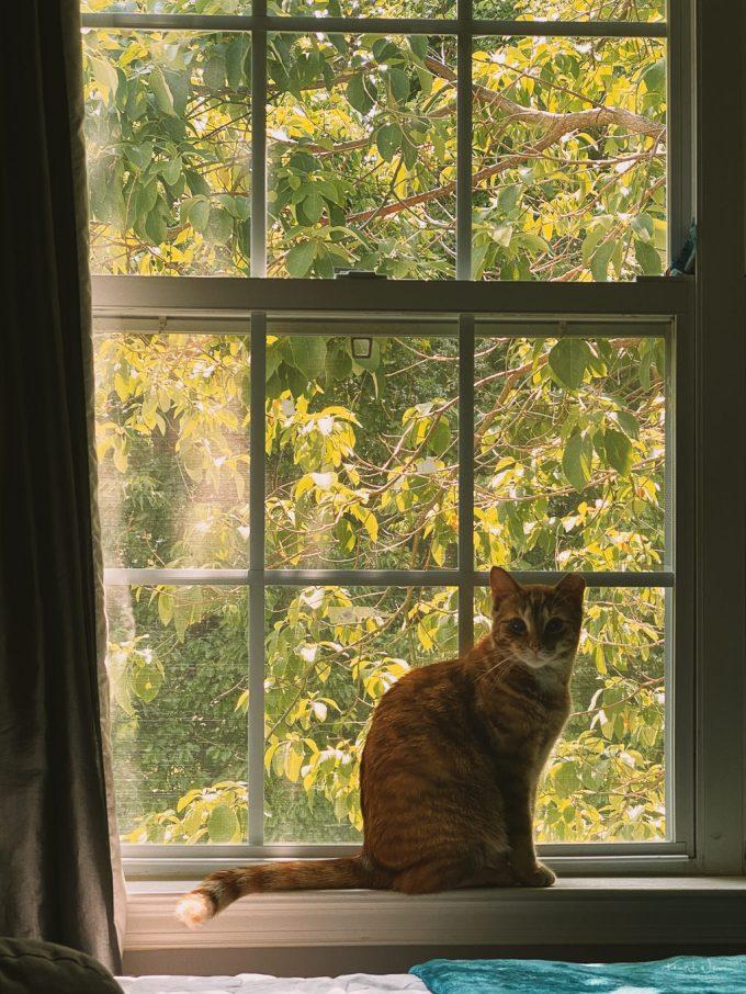 Alphonso Mango cat