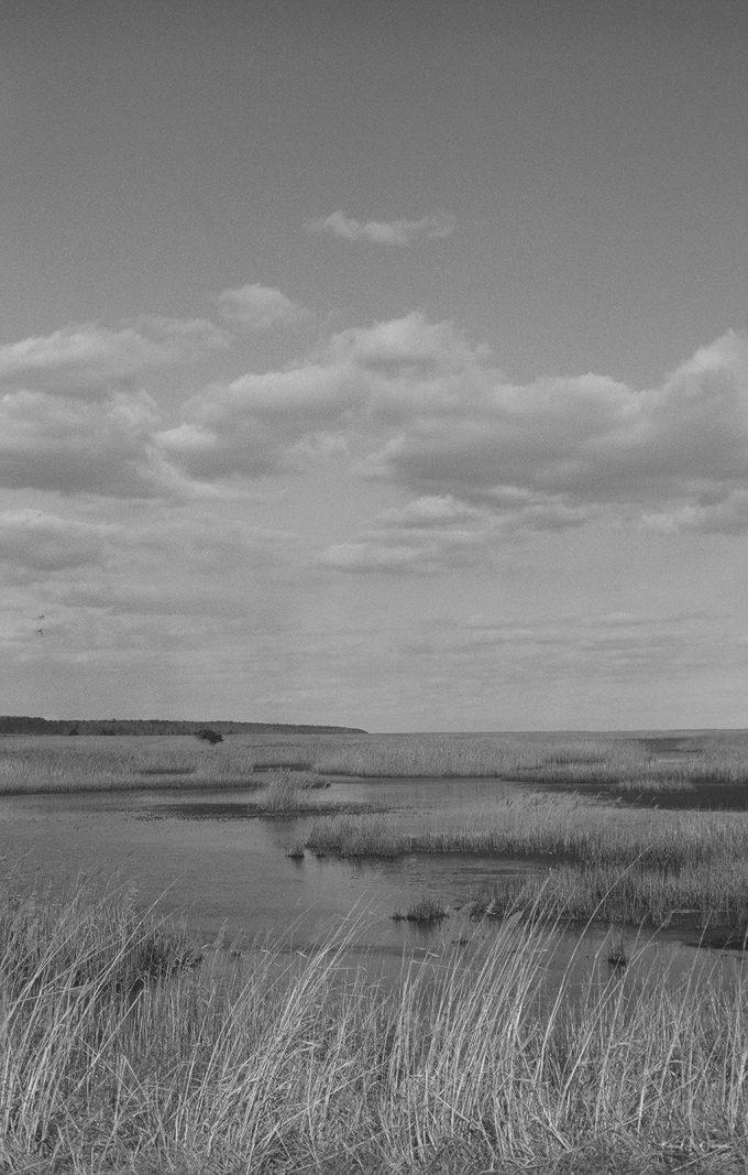 landscape wetlands