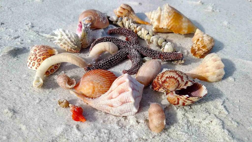 Shells on Shell Key
