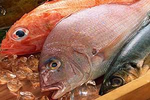 Seafood Seasonal Availability Chart