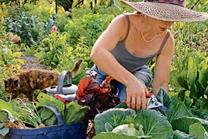 Coastal Gardening Festival