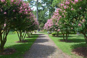 Manteo's Elizabethan Gardens