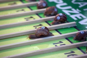 Of course snail racing is a real thing!