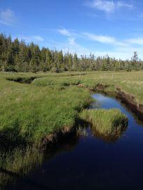 Hanson Lagoon Meadow