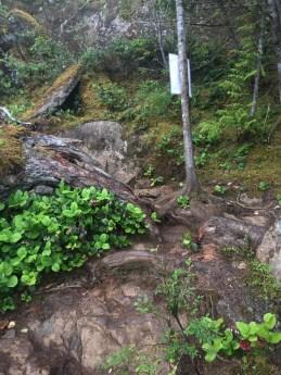 Mount Benson Project July 6-20-5