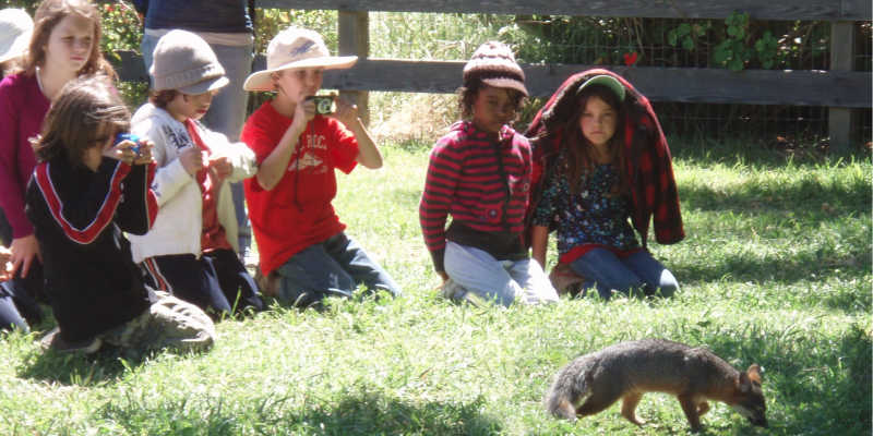 K-12 Education - Young Students get a close up experience with an Island Fox.