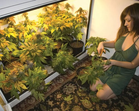 Photo CannabisCulture.com