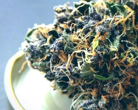 ISMOKE Top 5 Cannabis Strains 2016