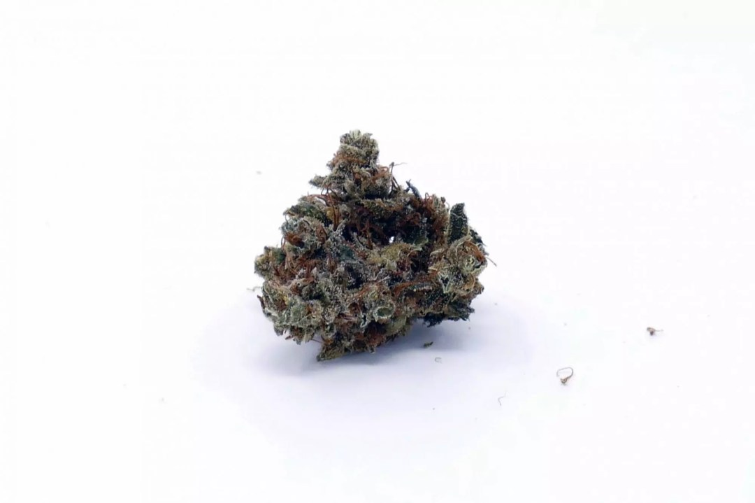 Casey Jones, Casey Jones Cannabis Strain Information & Review, ISMOKE