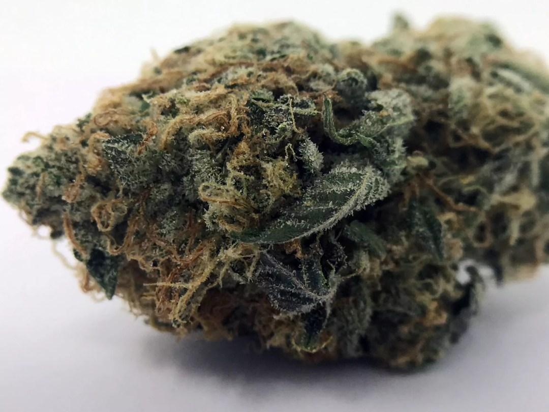Violator Kush, Violator Kush Cannabis Information & Review, ISMOKE