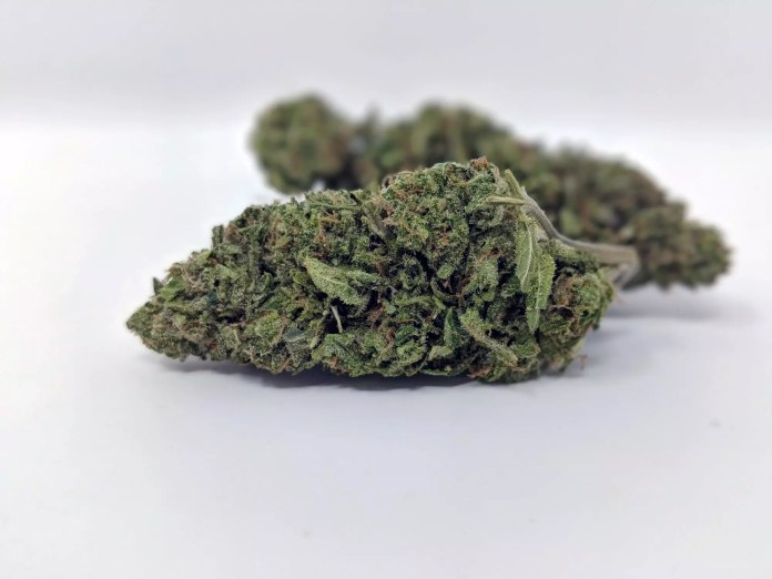 Cheese, Cheese Cannabis Strain Review & Information