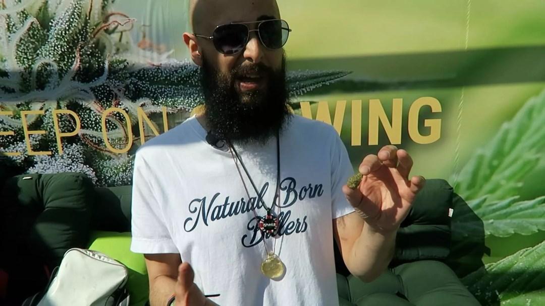 Silver Haze, Lemon Shining Silver Haze Cannabis Strain Review, ISMOKE
