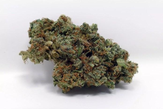 Peach Shnapps, Peach Shnapps Cannabis Strain Review & Information