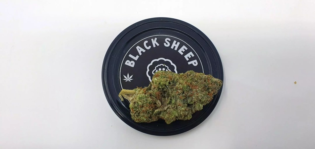 , Orange Slush Cannabis Strain Review & Information