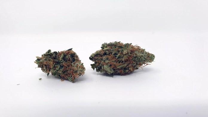 , Chocolate Starfish Cannabis Strain Review & Information