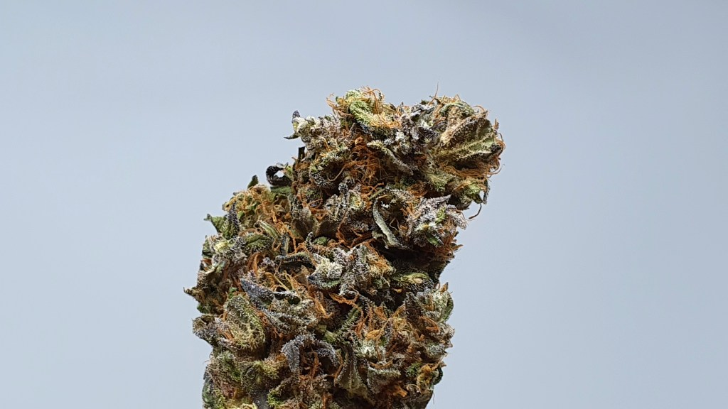 , Kurokush Cannabis Strain Review & Information, ISMOKE