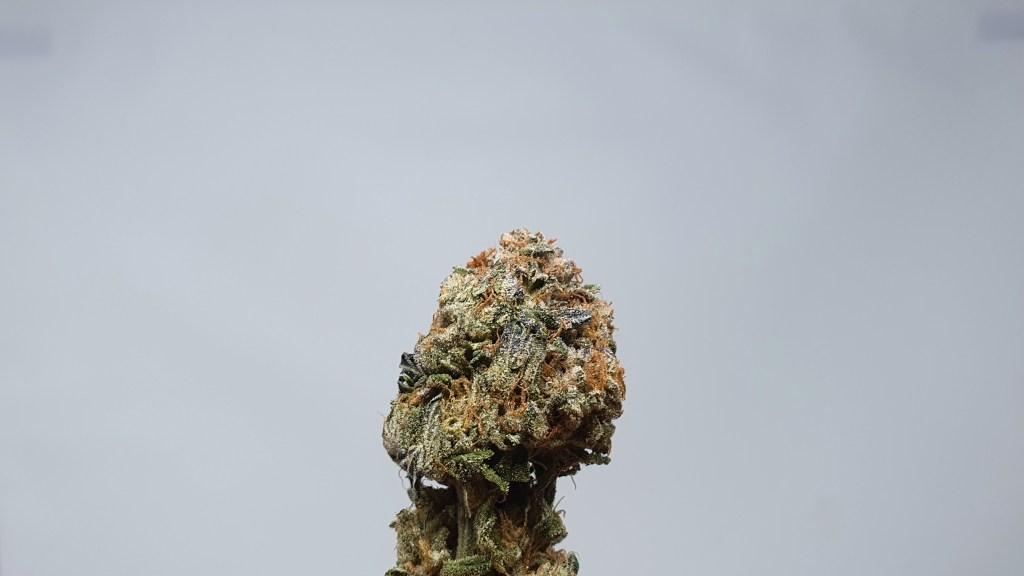 Berry Strudel, Berry Strudel Cannabis Strain Review & Information, ISMOKE