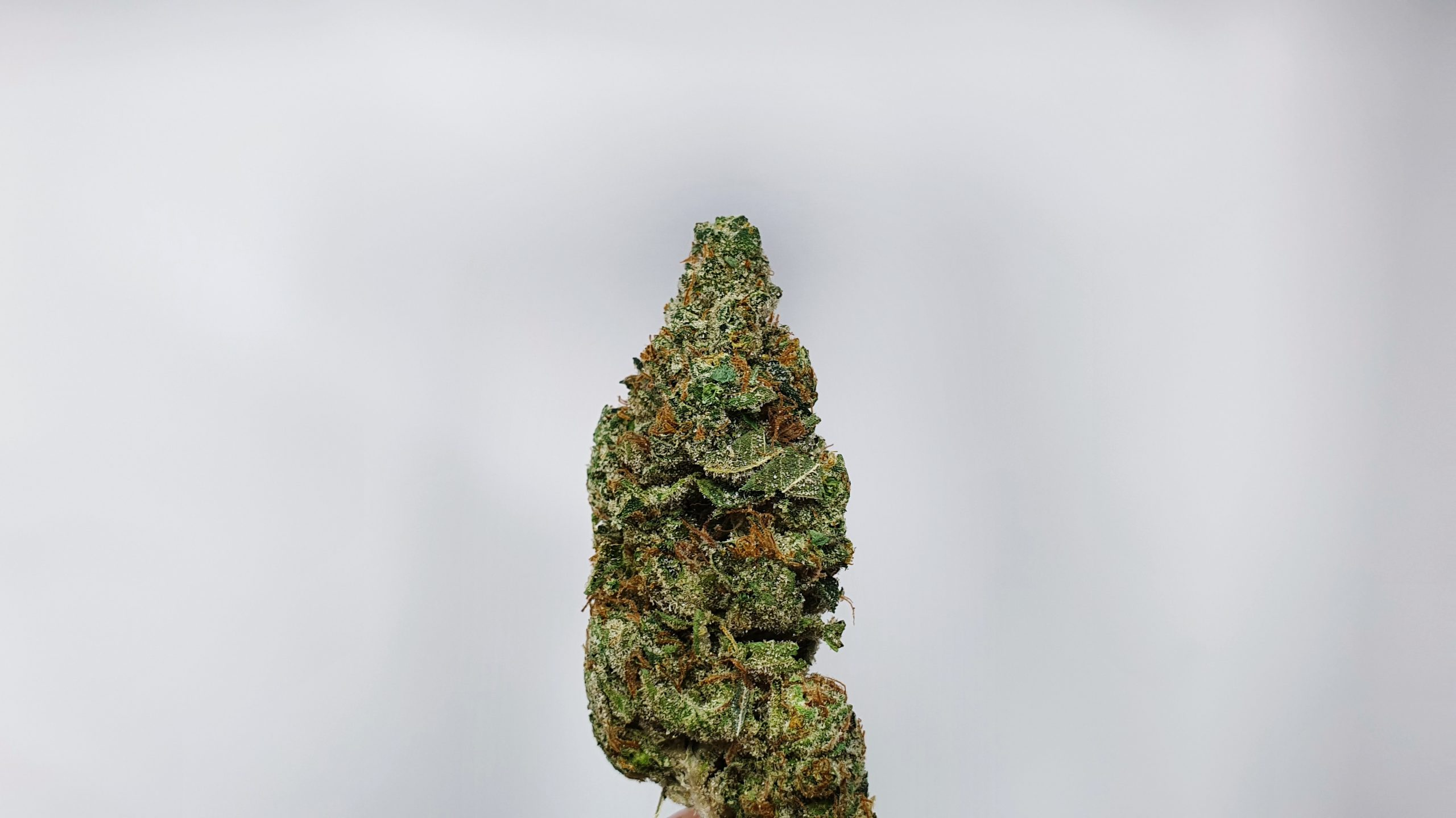 Hubba Bubba Cannabis Strain Review