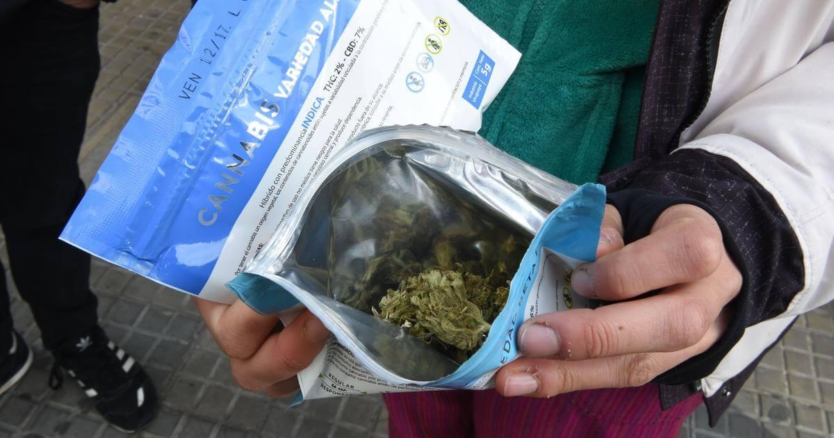 Más violencia entre narcos: el lado oscuro de la legalización de la marihuana en Uruguay