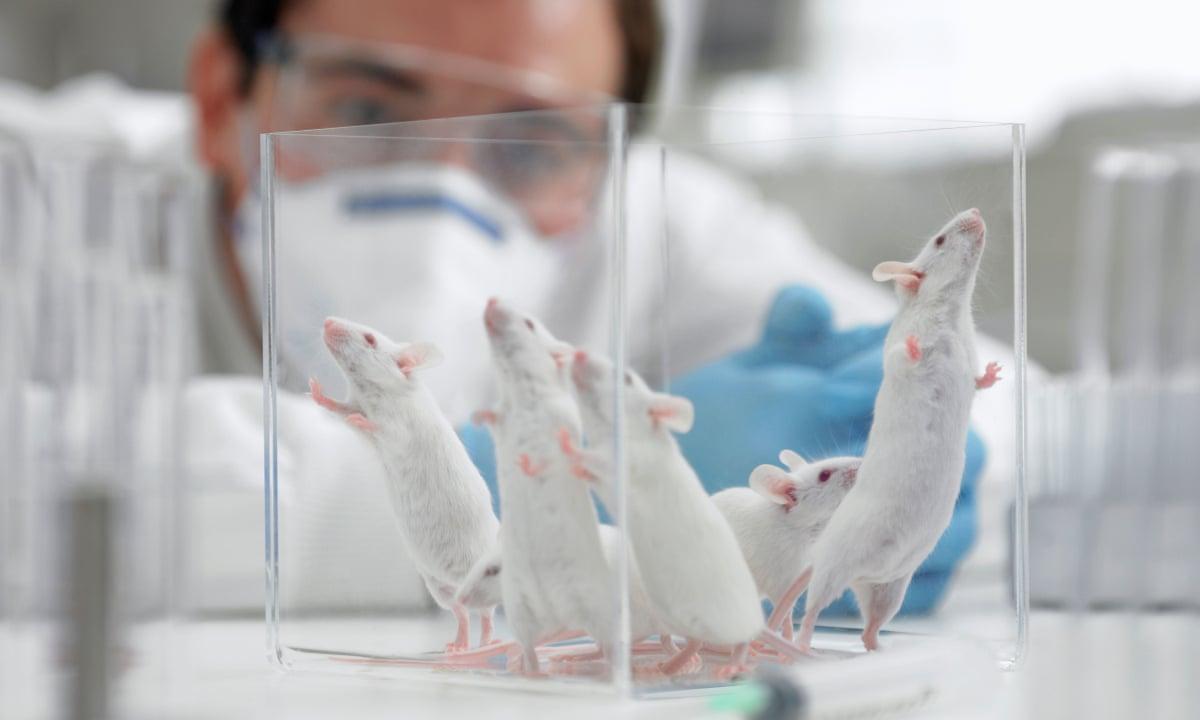 El primer fármaco desarrollado sin pruebas en animales se presenta para su aprobación por la FDA