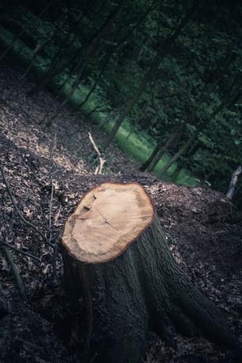 Waldspaziergang 6351 by Daniel Bierstedt