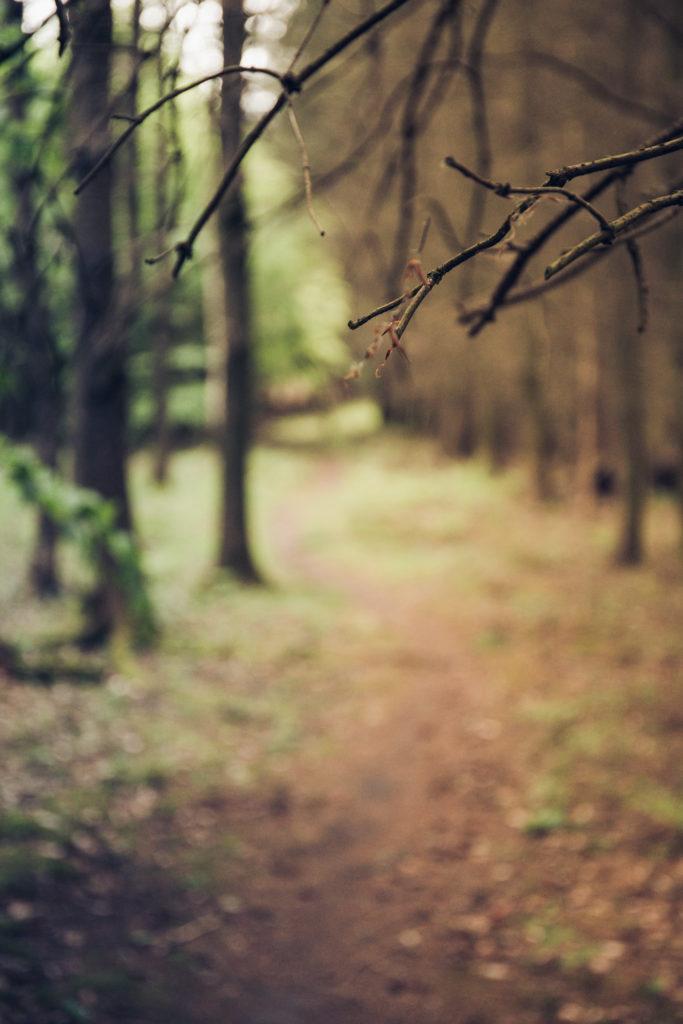 Der Hauswald im Mai