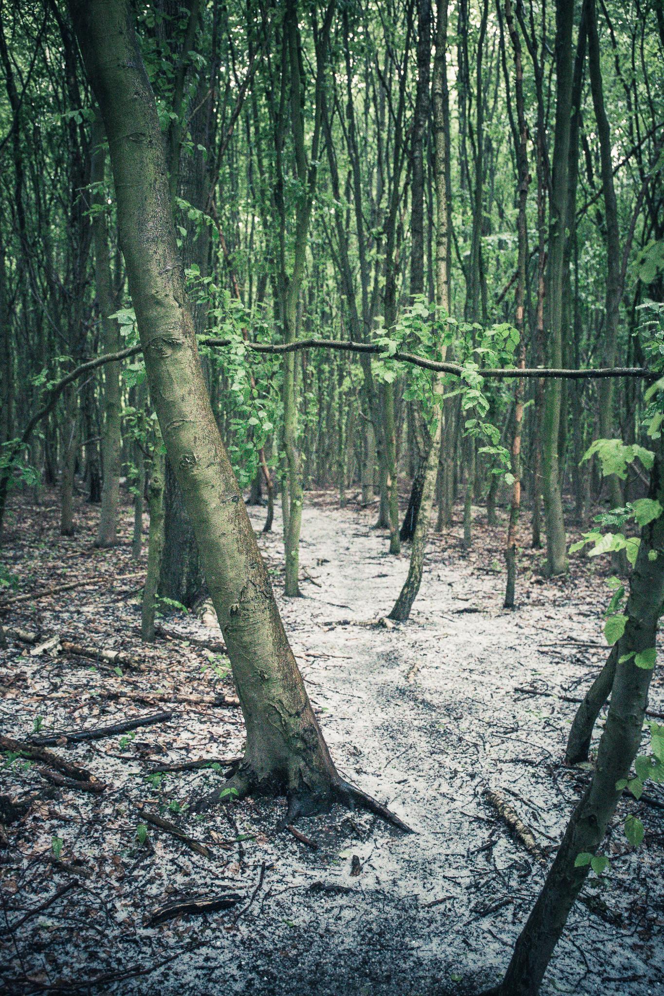 Waldspaziergang im Mai