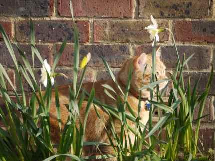 Daffodil Boy